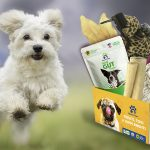 Customizable subscription box for dogs in the USA